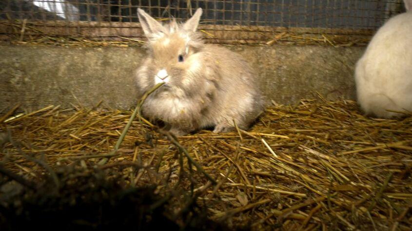 După câinii fără stăpân acum și iepurii pot fi adoptați
