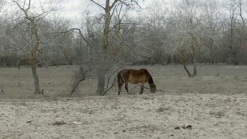 Letea, între caii sălbatici și șacali