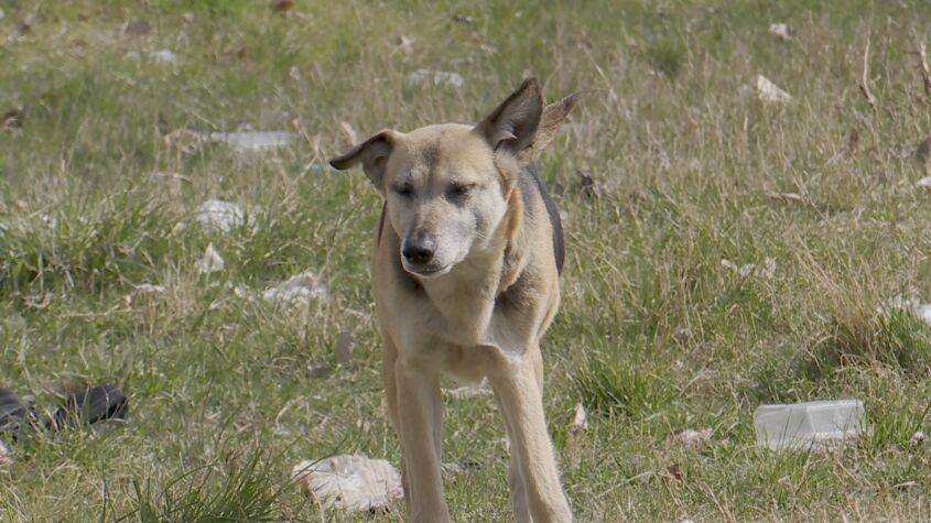 Un câine fără stăpân, la 200 de constănțeni