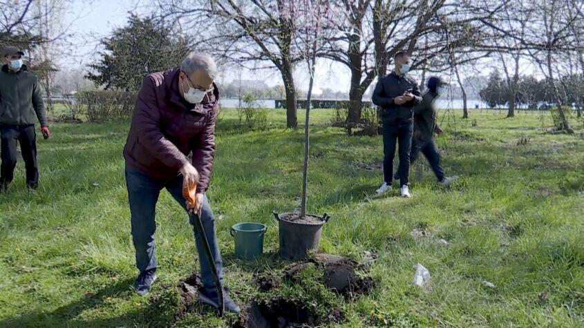 Primarul Constanței, la plantat copaci