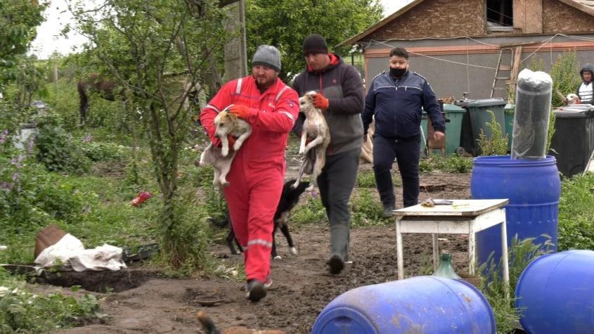 150 de patrupede salvate din iadul animalelor de la Amzacea