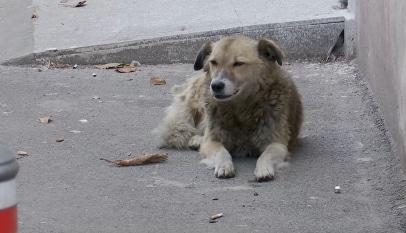 860 de câini sterilizați în Constanța