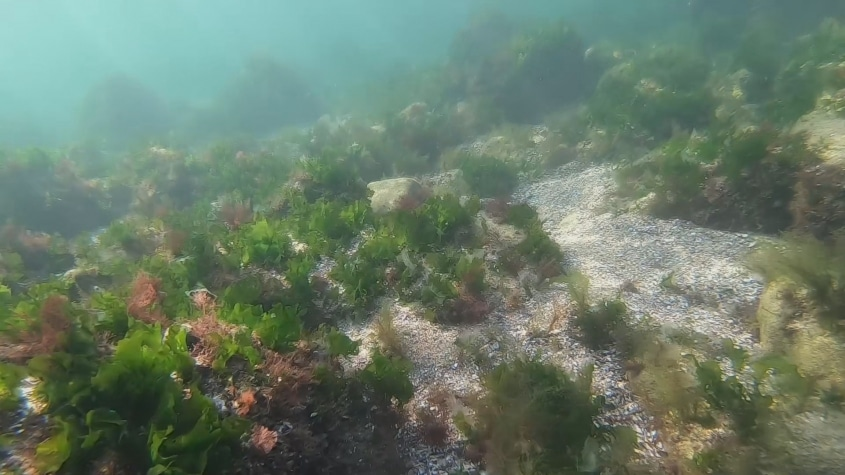 Liber la turism subacvatic