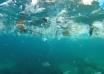Marea de plastic